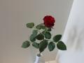 Vrtnica od Mihca